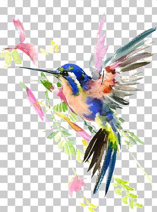 Hummingbird Watercolor Painting Drawing PNG