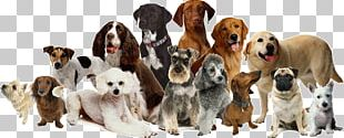 Dog Daycare Dog Grooming Cat Pet Sitting PNG