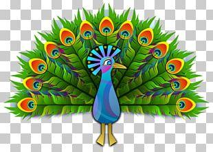 Peafowl Bird Drawing PNG