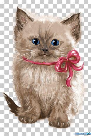 Persian Cat Asian Semi-longhair Ragamuffin Cat Whiskers Minuet Cat PNG