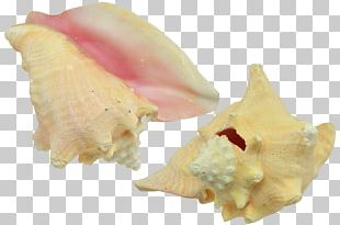 Seashell Shankha Conch Oyster Mussel PNG