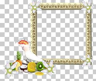 Frames Preview Teth PNG