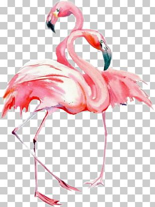 Bird Watercolor Painting Drawing Flamingos PNG