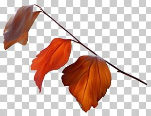 Leaf Autumn Leaves Petal PNG