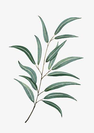 Watercolor Leaves PNG