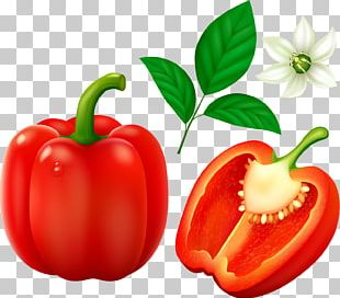 Bell Pepper Cayenne Pepper Chili Pepper Vegetable PNG