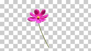 Violet Magenta Purple Pink Flower PNG
