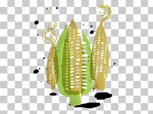 Corn On The Cob Maize Carrot Pea Illustration PNG