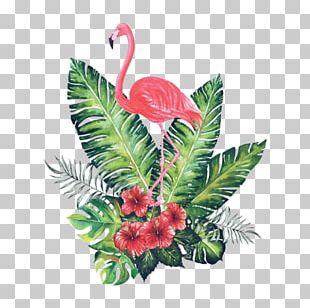Flamingos Watercolor Painting Bird Art PNG