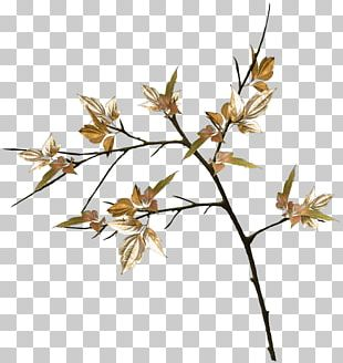 Twig Plant Stem Leaf Flower Grasses PNG