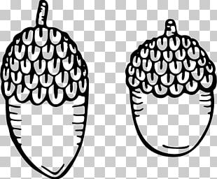 Acorn Drawing Color PNG