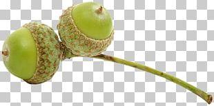 Auglis Acorn Fruit PNG