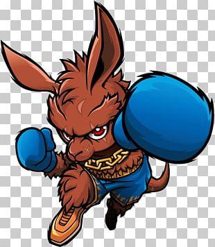 Boxing Kangaroo Drawing Boxing News PNG