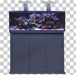 Reef Aquarium Aquarium Filters Fishkeeping Koi PNG