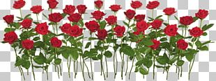 International Rose Test Garden Rose Garden PNG