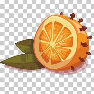 Mandarin Orange Fruit Drawing PNG