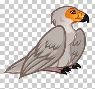 Owl Vulture Hawk Beak PNG
