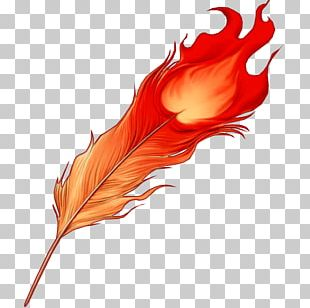 Feather Phoenix Bird Color PNG