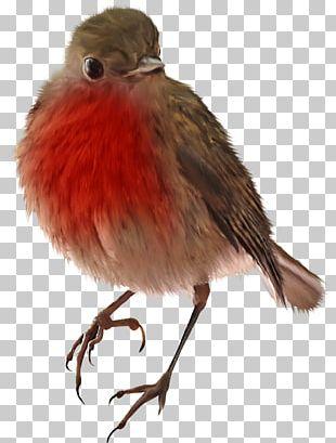 Bird Owl Sparrow Woodpecker PNG
