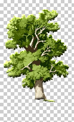 English Oak Tree Acorn Root PNG