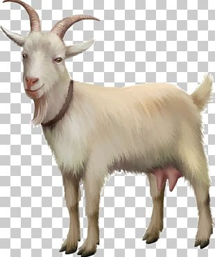 Rove Goat Sheep Stock Photography Stock Illustration PNG
