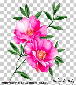 Watercolour Flowers Watercolor Painting Floral Design Drawing PNG