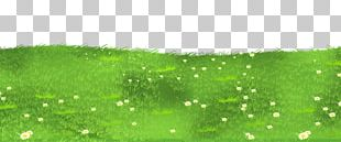 Lawn Grasses PNG