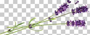Hvar English Lavender Lavender Oil Essential Oil PNG