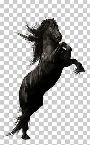 Friesian Horse Stallion Andalusian Horse Peruvian Paso Black PNG