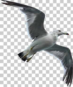 Gulls Bird Flight Bird Flight Sky PNG