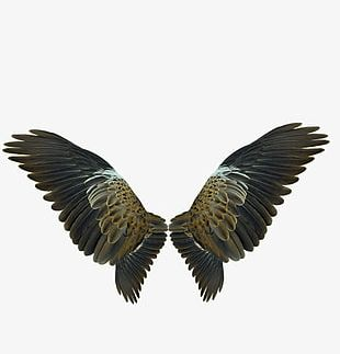 Eagles Wings PNG