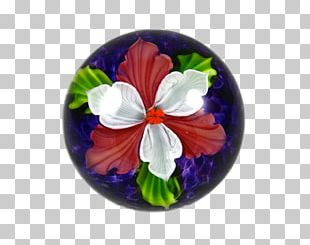 Pansy Mallows Violet Family PNG