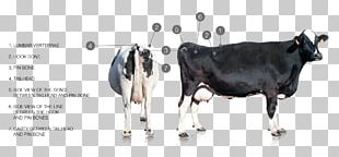 Dairy Cattle Milk Goat PNG