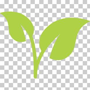 Plants Công Ty TNHH Thảo Dược Thiên Nhiên Gold Leaf Orchids Houseplant PNG