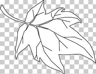 Coloring Book Autumn Leaf Color PNG