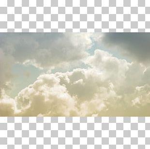 Desktop Cloud Forest Sky White PNG