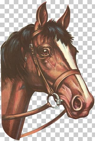 Horses In Art Pony Greeting Card Decal PNG