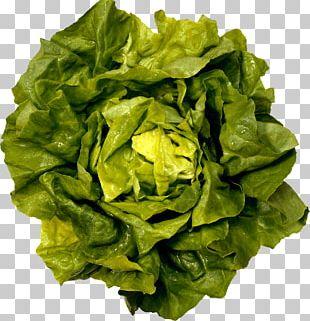 Fresh Green Salad PNG