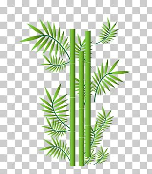 Bamboo Ornament Illustration PNG