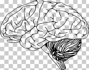 Human Brain Drawing Black And White PNG