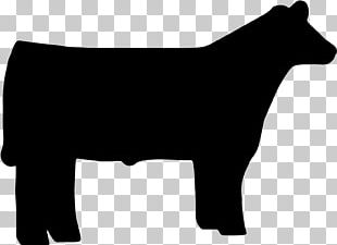 Beef Cattle Angus Cattle Sheep Livestock Show PNG