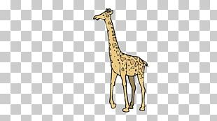 Giraffe Fauna Wildlife Pattern PNG