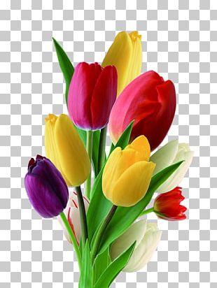 Netherlands Tulip Flower Nosegay PNG