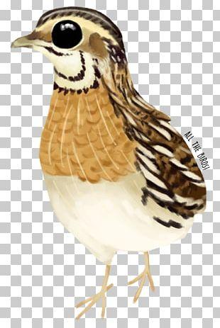 Bird Galliformes Beak Feather Animal PNG
