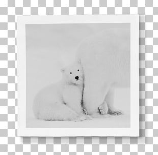 Whiskers Arctic Fox Polar Bear Dog Cat PNG