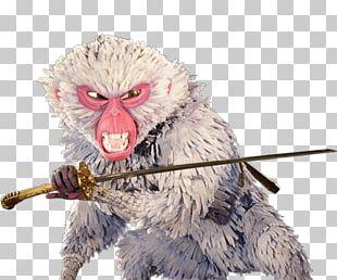 Kubo Monkey PNG