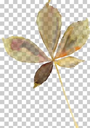 Maple Leaf Autumn Leaves Oak Plant Stem PNG
