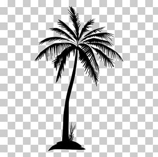Arecaceae Tree Silhouette PNG