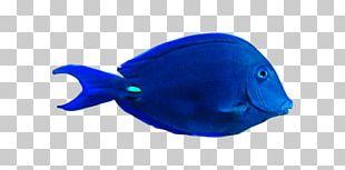 Fish Plastic Marine Mammal .cf PNG