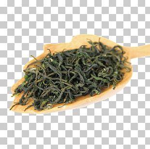 Green Tea Biluochun Nilgiri Tea Bancha PNG